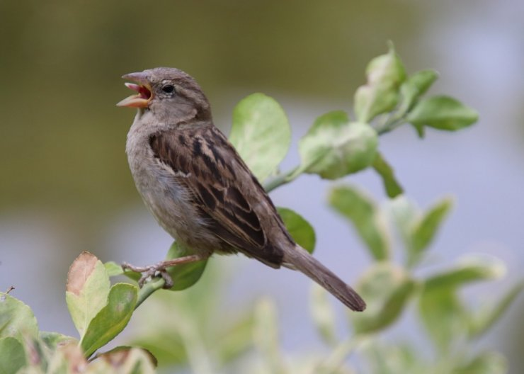 Saturday Academy and Audubon's summer camp the Language of Birds